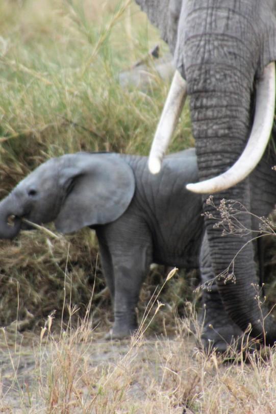 Elefantenbaby mit Mama im Tarangire Nationlpark