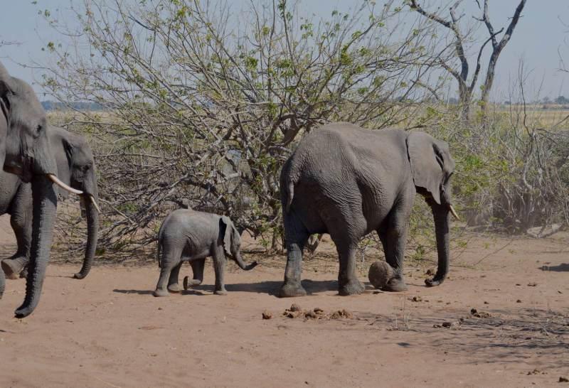 Elefanten im Ruaha