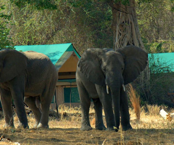 Essential Destination - Ruaha Mdonya Camp im Ruaha Nationalpark