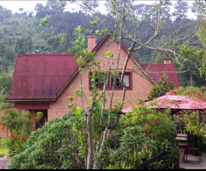 Muellers Lodge Usambara