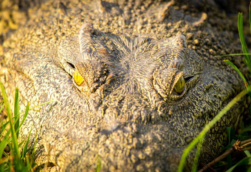 Rivertour auf dem Chobe River Botswana
