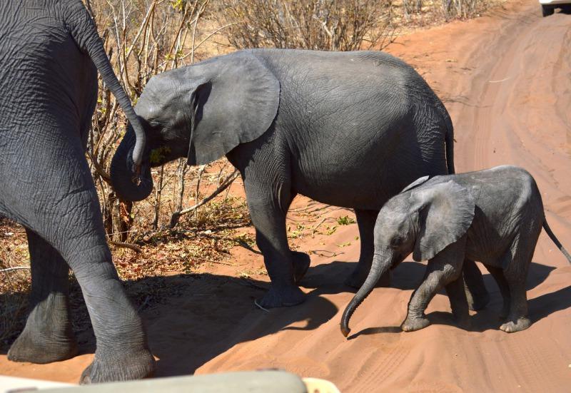Elefanten im Addo Elephant Park