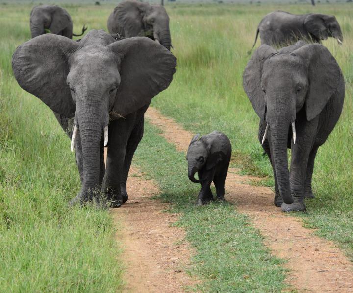 Elefanten im Arusha Nationalpark
